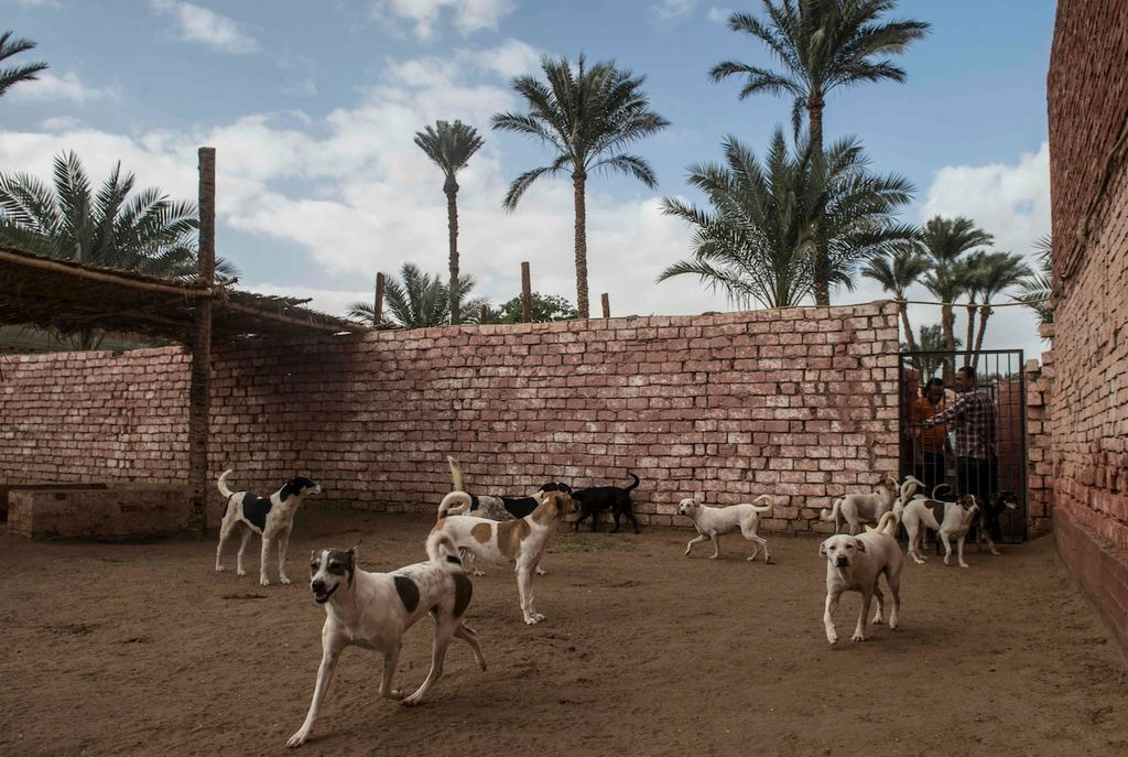 Des chiens du refuge HOPE, à Abusir